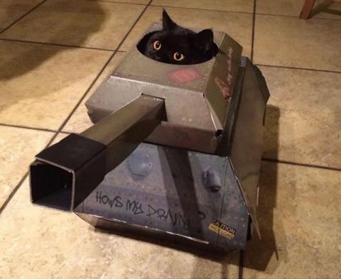 猫と戦車05