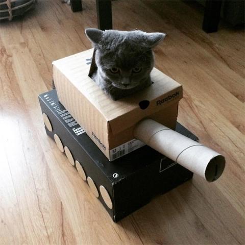 猫と戦車07