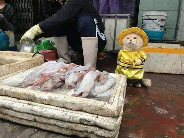 かわいい猫の魚売りの画像の数々!!