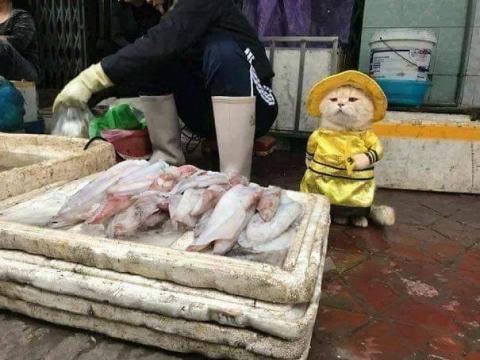 かわいい猫の魚売り01