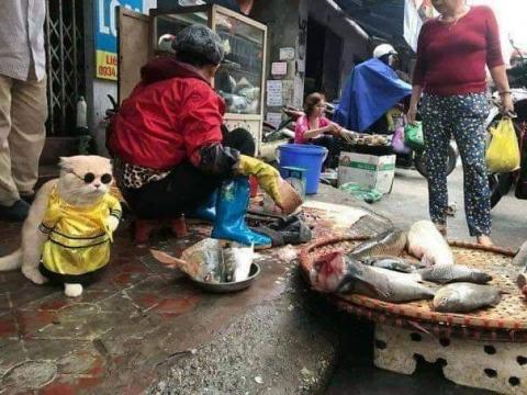 かわいい猫の魚売り02