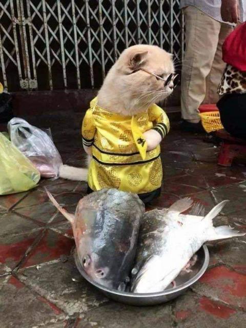 かわいい猫の魚売り03