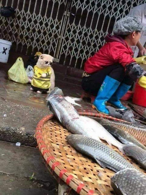 かわいい猫の魚売り04