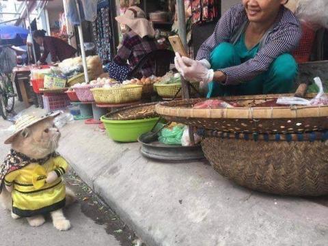 かわいい猫の魚売り05