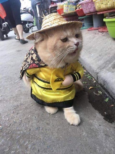 かわいい猫の魚売り06