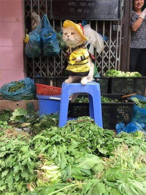 かわいい猫の魚売り07