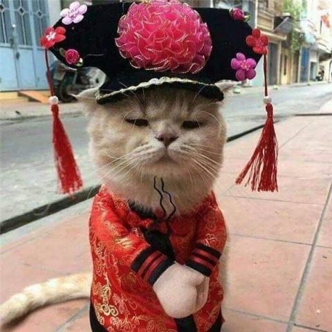 かわいい猫の魚売り08