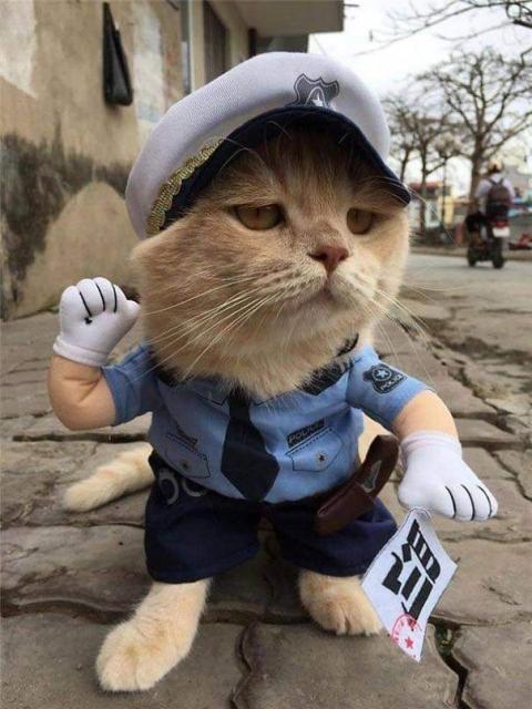 かわいい猫の魚売り09