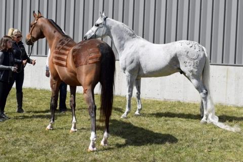 馬の毛を刈り込んで模様を描く03