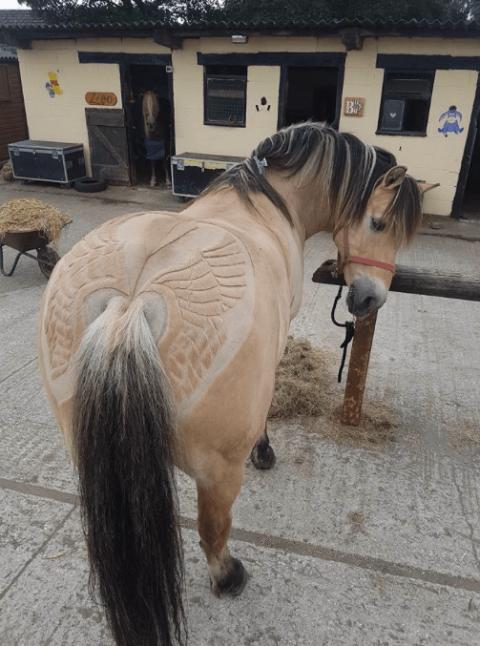馬の毛を刈り込んで模様を描く06