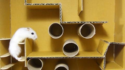 ネズミが迷路を攻略01