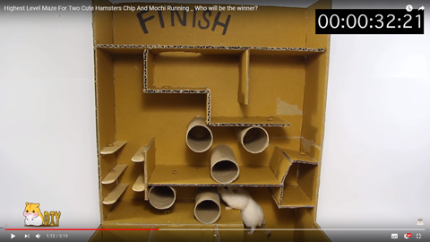 ネズミが迷路を攻略04