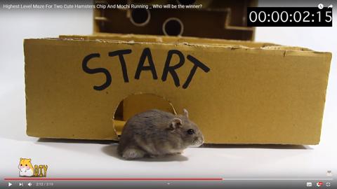 ネズミが迷路を攻略07