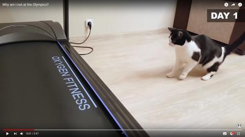 ネコちゃんがルームランナー2