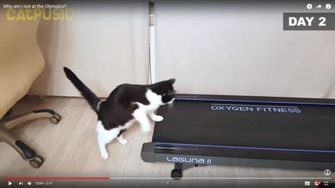 ネコちゃんがルームランナー3