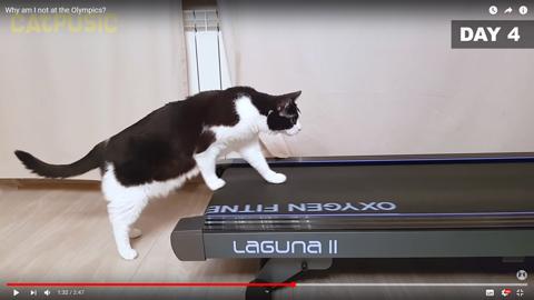 ネコちゃんがルームランナー4