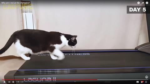 ネコちゃんがルームランナー5