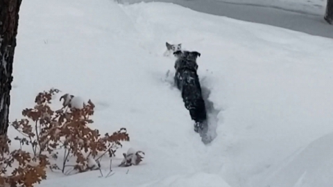 雪に埋もれそうな犬01