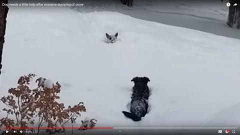 雪に埋もれそうな犬04