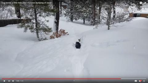雪に埋もれそうな犬06