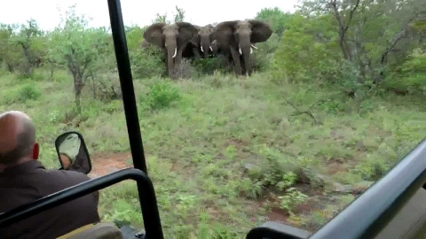 象に囲まれる01