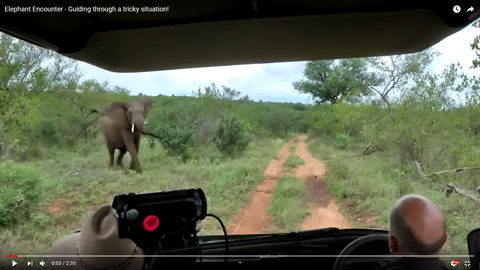 象に囲まれる02