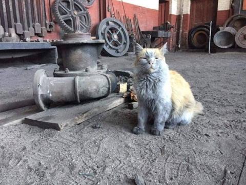 汚すぎるネコ02