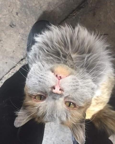 汚すぎるネコ03