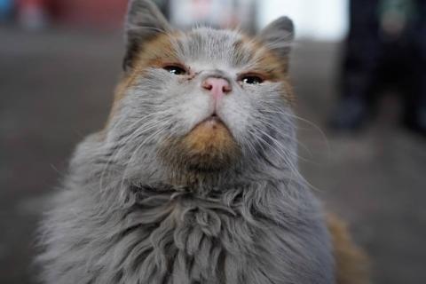 汚すぎるネコ06