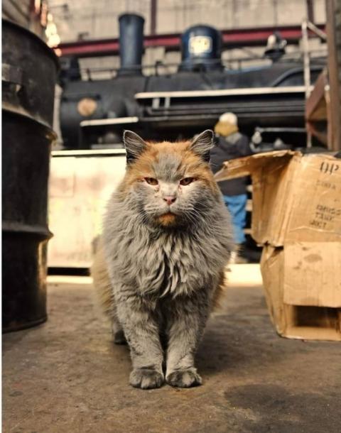 汚すぎるネコ08