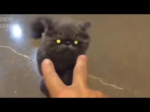 ネコの恐ろしい悪事01