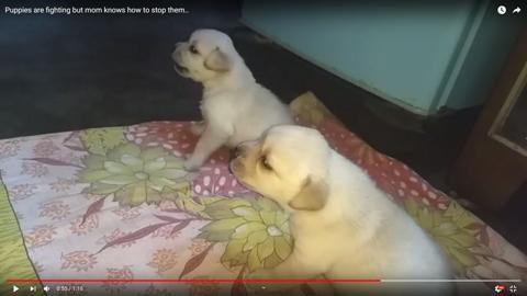お説教する犬04
