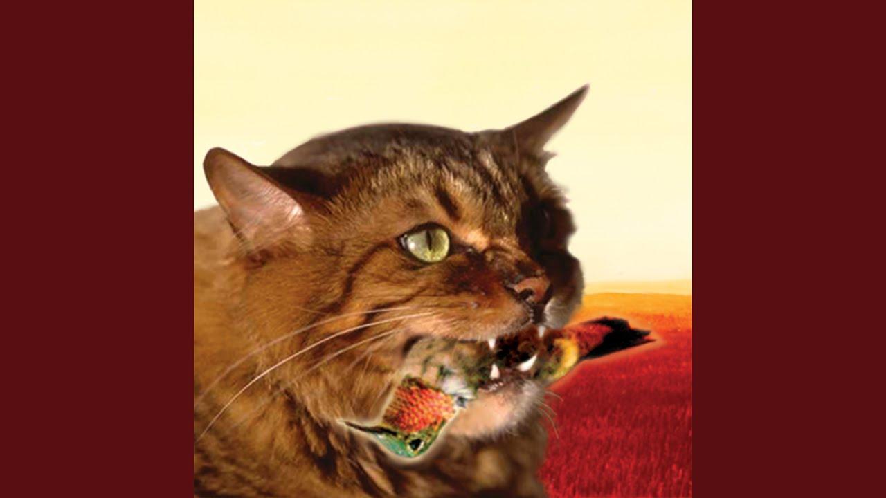 ネコのために!歌った歌が癒やされる!!