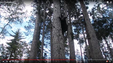クマを追い払う06