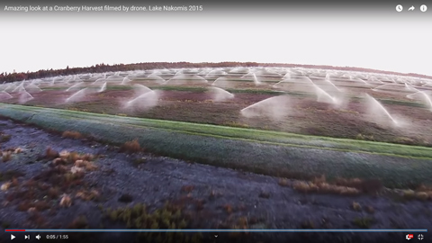 クランベリーの収穫方法02