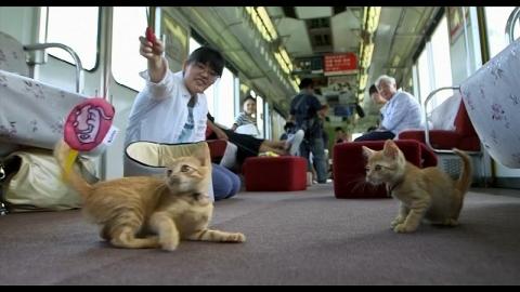 ネコが乗る電車01