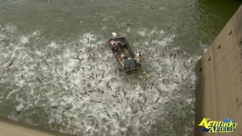 電流で一網打尽の漁法01