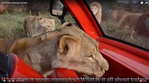ライオンに素手01