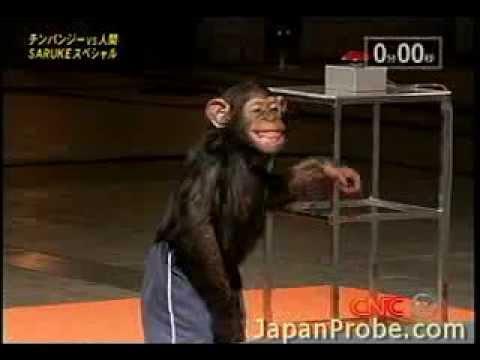 チンパンジーの身体能力01