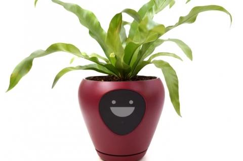 植物の気持ち04
