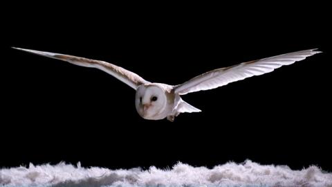 フクロウの飛び方01