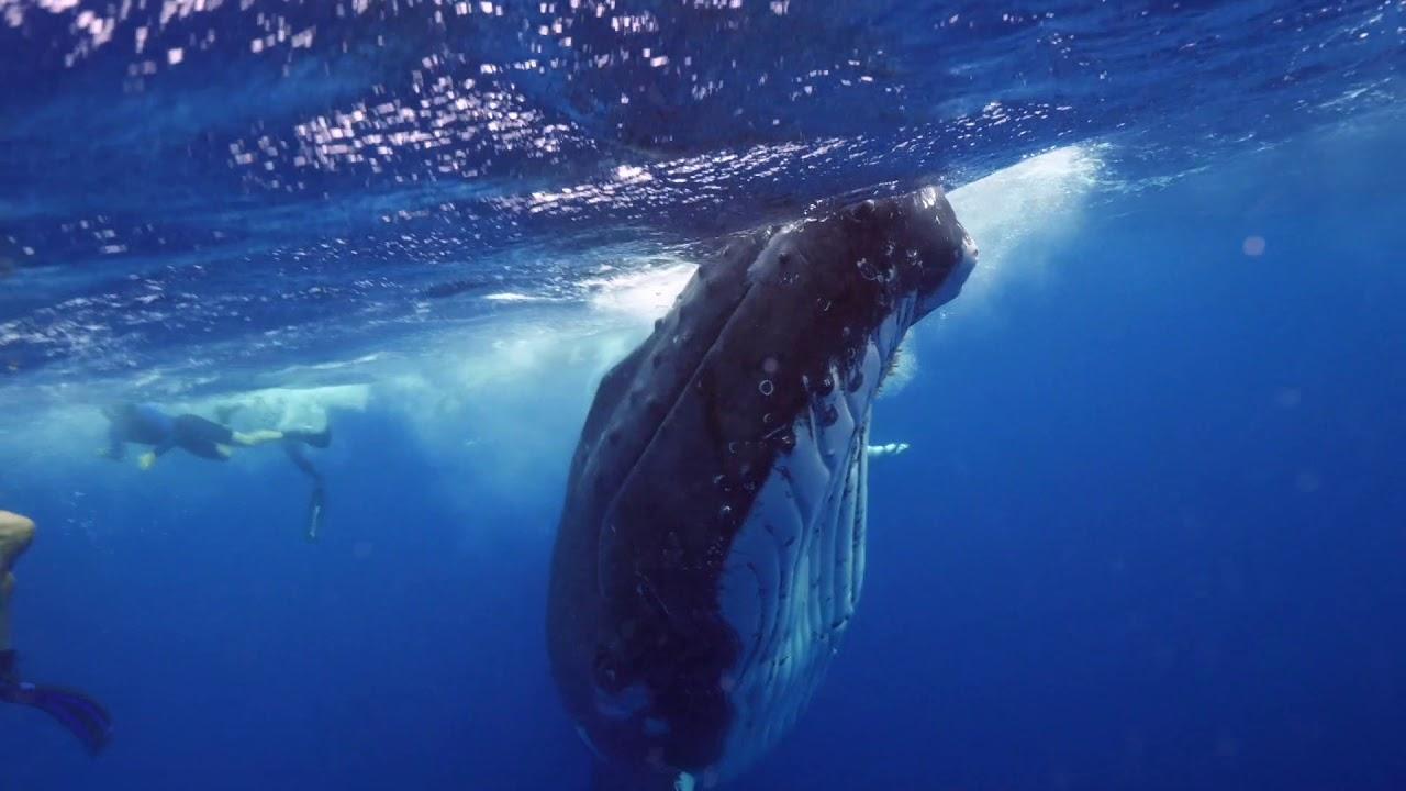 シロナガスクジラと!楽しく遊ぶ人たち!!