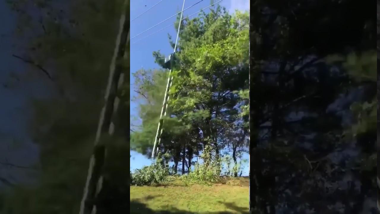 ダイナミックで!適当過ぎる木の枝の刈りかたが凄い!!