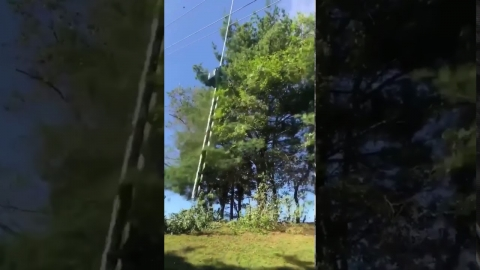 枝の刈りかた01
