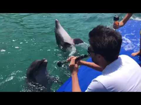 イルカが歌う01