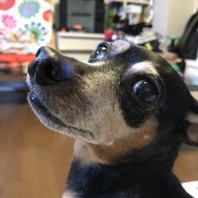 2おじたん犬2