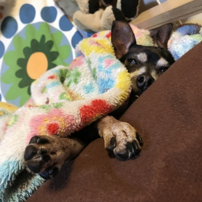 寝る犬の足2