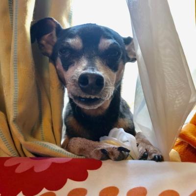 悪い顔の犬2
