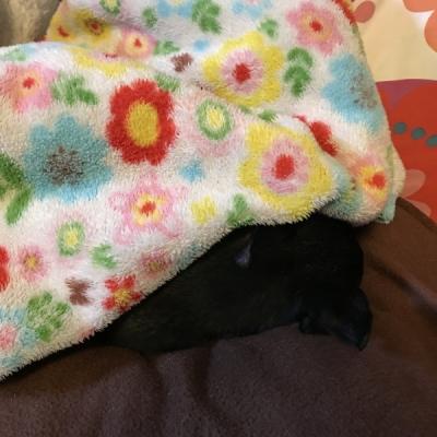 起きてこない犬2