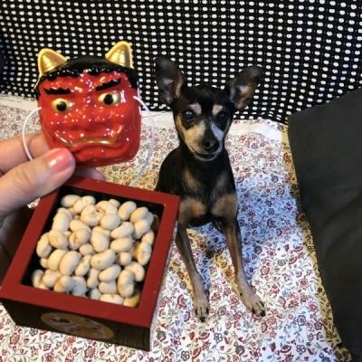 福豆と犬と2